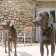 foto honden op terras